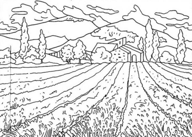 Bộ sưu tập tranh tô màu cánh đồng lúa cho bé thỏa sức tô màu