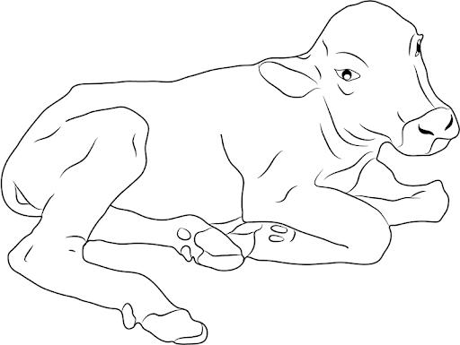 Tổng hợp các bức tranh tô màu con trâu cho bé