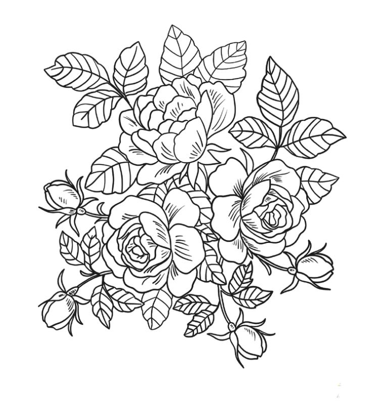 Tổng hợp các bức tranh tô màu hoa hồng cho bé