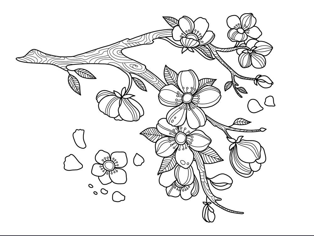 Tổng hợp các bức tranh tô màu hoa mai đẹp cho bé tô màu