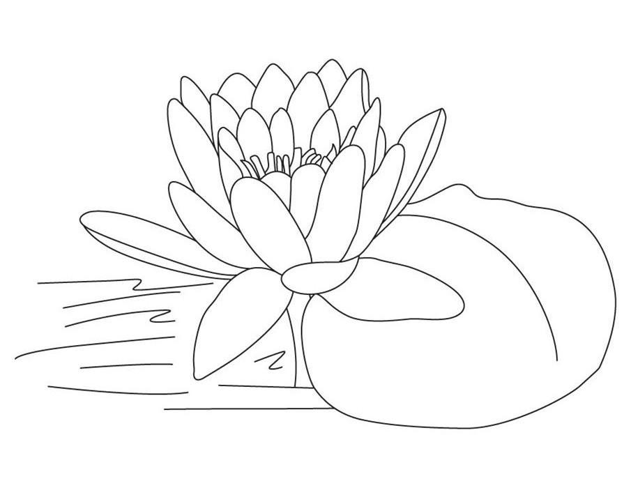 Tổng hợp các bức tranh tô màu hoa sen cho bé