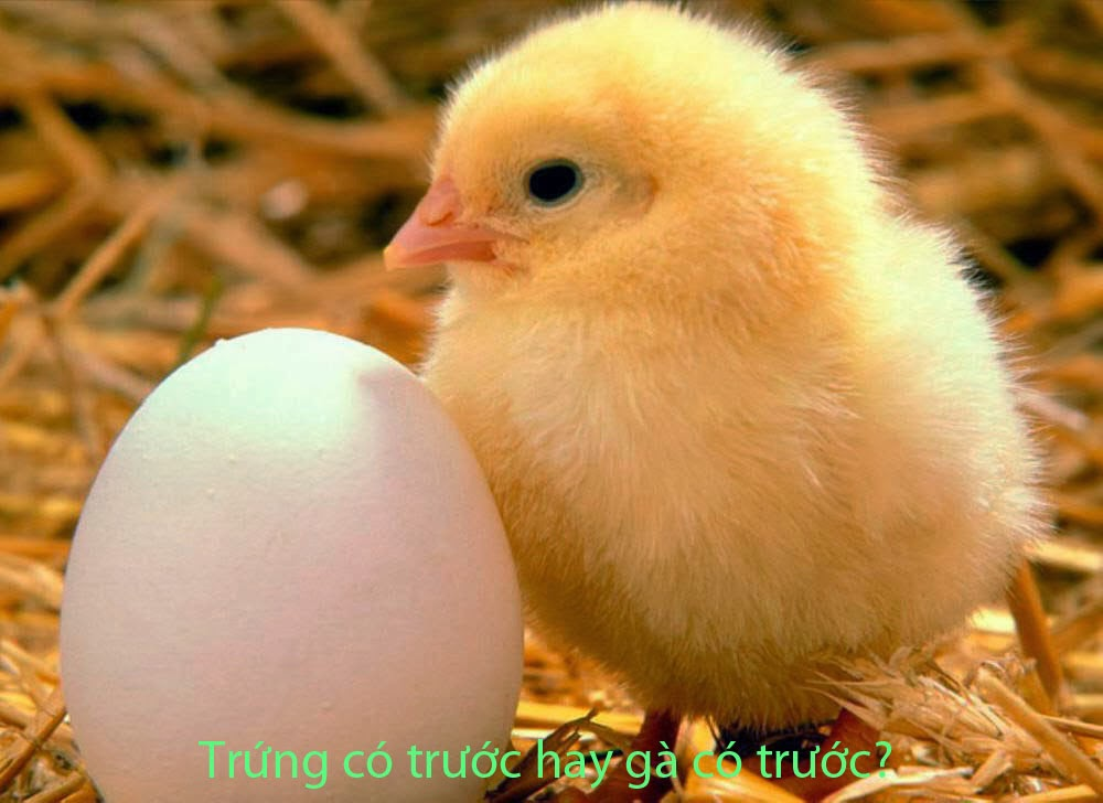 Giúp em trả lời câu hỏi: Trứng có trước hay gà có trước?