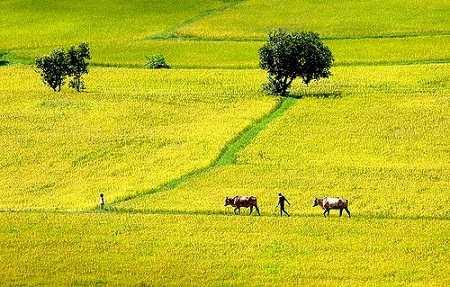 Tả cảnh buổi sáng trên cánh đồng quê em lớp 5, 6